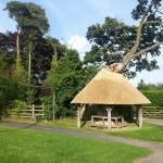 The Mushroom Tree Botolph Claydon